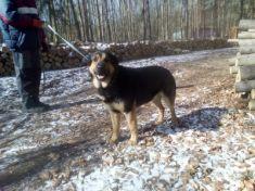 Pes a fena z ČSAD
