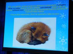 Co dělají zvířátka v zimě? MŠ Poupátko