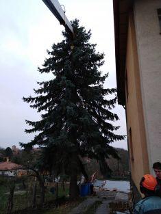 Vánoční strom pro Benátky 2018